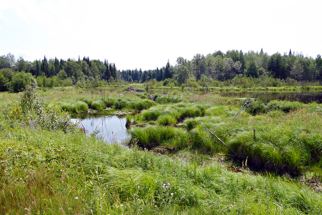 Lumberjack Wetlands_web